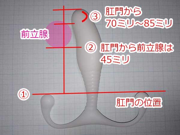 わたしの前立腺とアネロスの位置関係